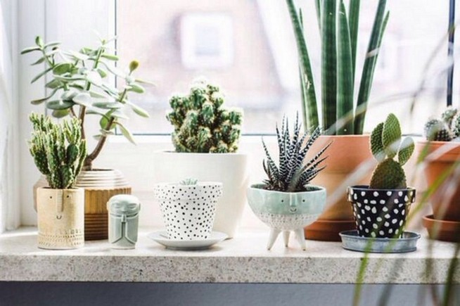 11 Lovely Small Cactus Ideas For Interior Decorations 33