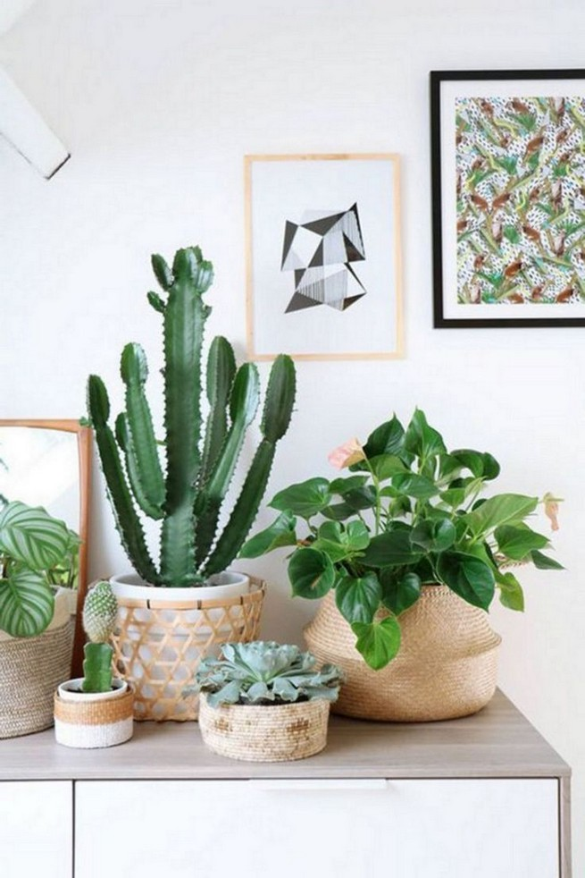 11 Lovely Small Cactus Ideas For Interior Decorations 39