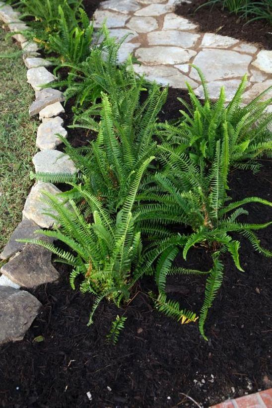 15 Elegant Front Sidewalk Landscaping Ideas 24