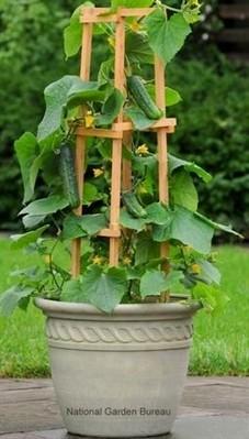 21 Best Container Vegetables Garden Inspirations Ideas 18
