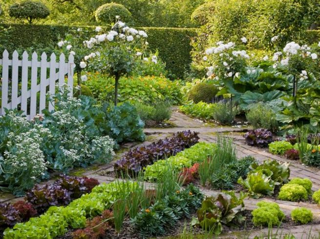 15 Wonderful Edible Plants Ideas To Enhance Your Backyard Garden 30