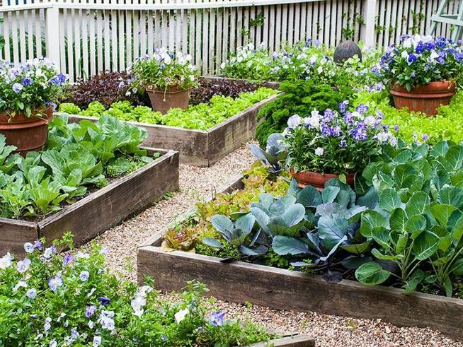 15 Wonderful Edible Plants Ideas To Enhance Your Backyard Garden 32