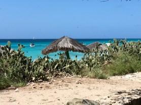 Palapas on a crystalline blue Caribbean beach.