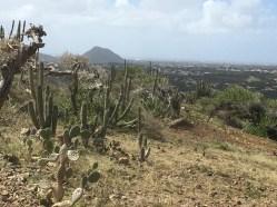 Aruba's starkly beautiful arid landscape.