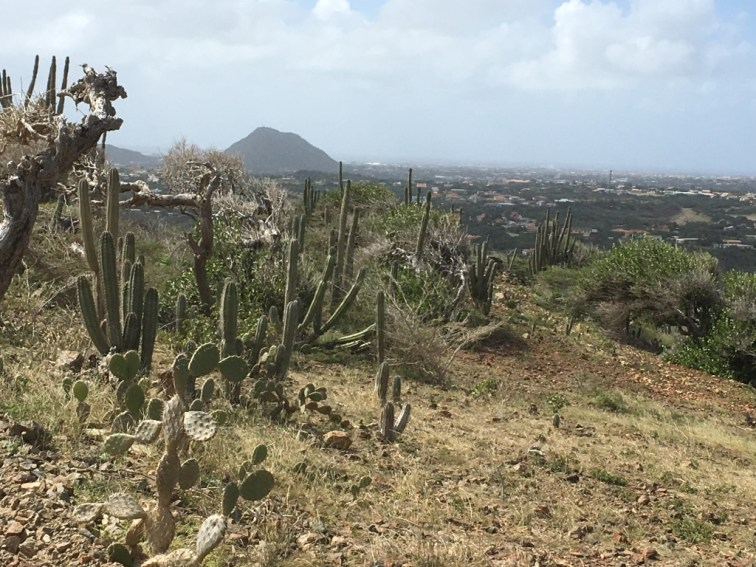 Aruba's starkly beautiful arid landscape.