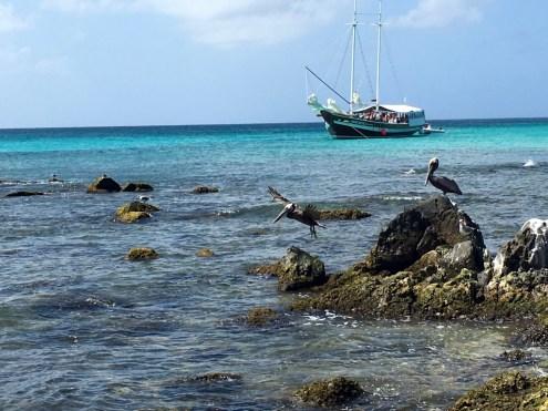 Pelicans set sail near Arashi Beach.