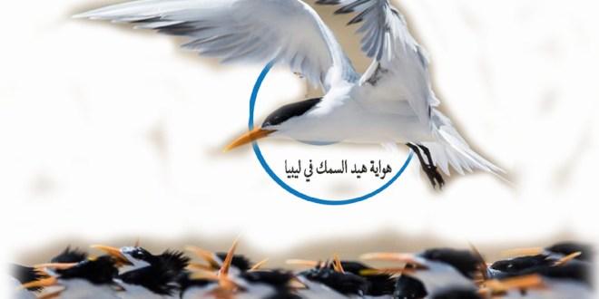 تزاوج الخطاف المتوج ( الخرشنة ) فى ليبيا