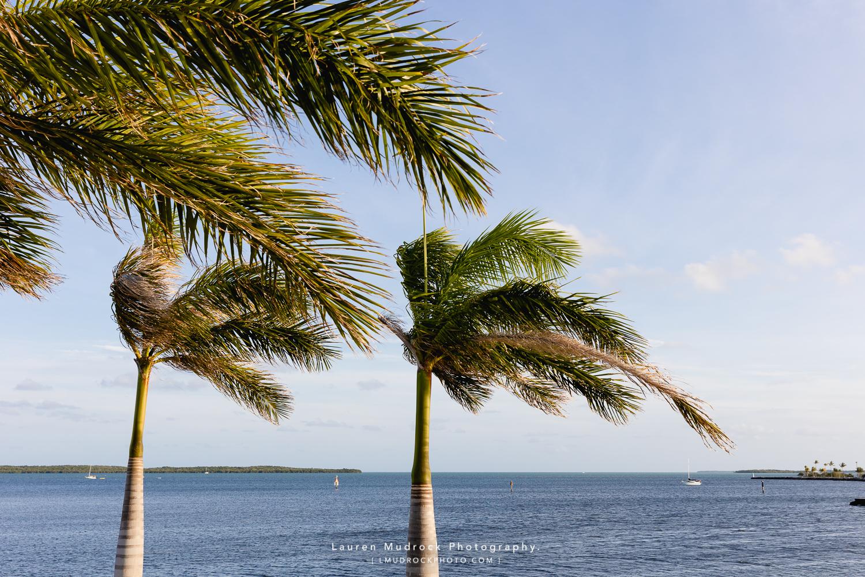 Playa Del Largo palm trees