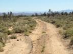 desert, California, Mojave, cactus, Joshua tree, Nate, Maranda, Arnie, LeeAnn Adams, L. N. Holmes, road trip