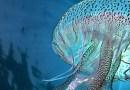 """Laboratorio creativo """"Chiedi scusa alla medusa"""""""