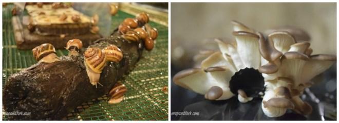 escargot et champi Collage