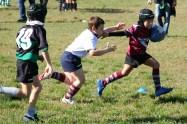 U8 Rugby Cesano 2017 (16)