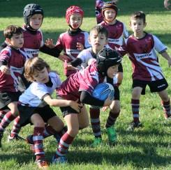 U8 Rugby Cesano 2017 (23)