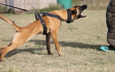 K9 Conditioning: Preventing Injury in K9 Athletes