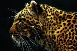 Cheetah-De-Fuego-485x728