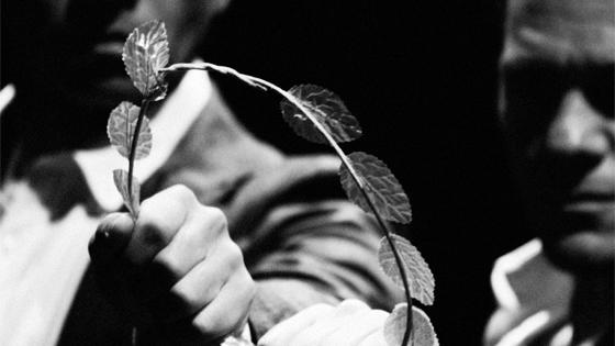 Criadero de Morsas estrena «Coriolano después de William Shakespeare» en el Teatro Principal de Alicante