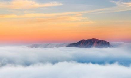 """El Concurso Fotográfico de Naturaleza """"Alicante Natural 2018"""" para plantar 10000 árboles en Alicante"""
