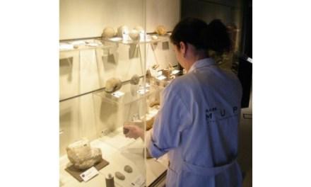El Museu Paleontològic d'Elx dóna un nou impuls a la conservació de les seues col·leccions