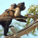 Terra Natura Benidorm vive una eclosión de nacimientos con 18 nuevas crías de siete especies diferentes