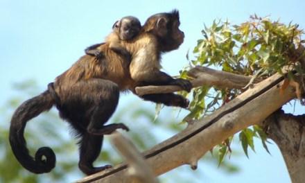 Terra Natura Benidorm viu una eclosió de naixements amb 18 noves cries de set espècies diferents
