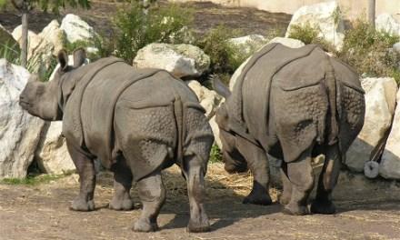 Terra Natura Benidorm colabora en el proyecto internacional Indian Rhino Vision 2020