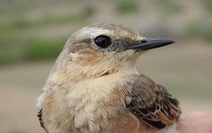 La Universidad de Alicante se suma a la celebración del Día de las Aves en la Isla de Tabarca