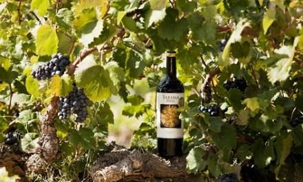 Bodegas Volver: triunfando en Wine Spectator 2019