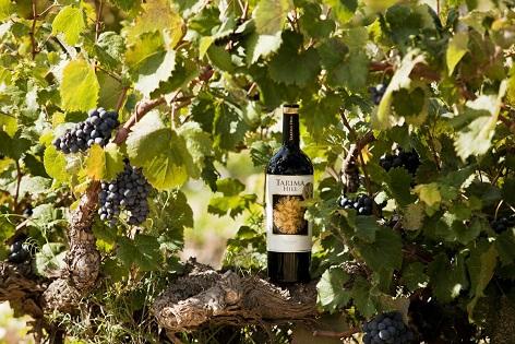 Cellers Volver: triomfant en Wine Spectator 2019