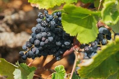 Els Vins AlacantDOPlideren els Premis Regne de laMonastrell