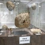 El Museo de la Biodiversidad de la Universidad de Alicante y el Ayuntamiento de Ibi inauguran la exposición «Los insectos mueven el mundo»