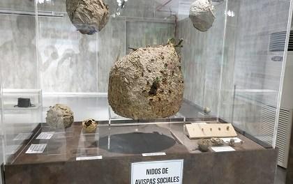 El Museu de la Biodiversitat de la Universitat d'Alacant i l'Ajuntament d'Ibi inauguren l'exposició 'Els insectes mouen el món'