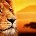 El Rey León y la ecología