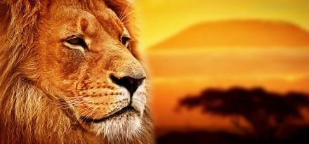 El Rei León i l'ecologia