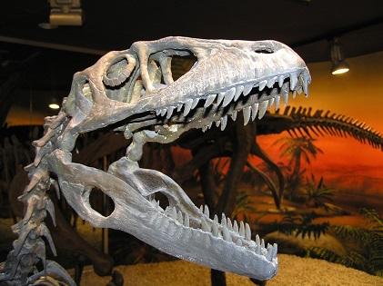 El Museu Paleontològic d'Elx aconsegueix el distintiu d'establiment preparat davant la COVID-19