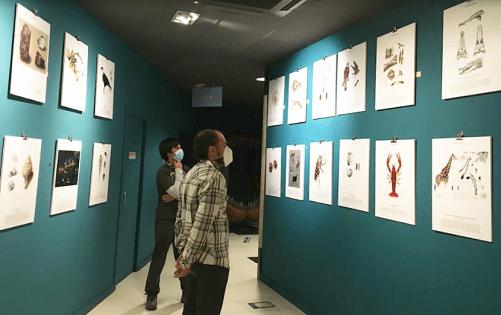 La muestra 'Ilustraciencia 7' llega al MUPE con la exposición de 40 obras científicas