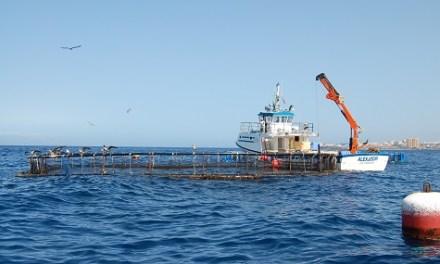 La Universidad de Alicante lidera un proyecto para mejorar el cultivo de peces en mar abierto frente a episodios climáticos extremos