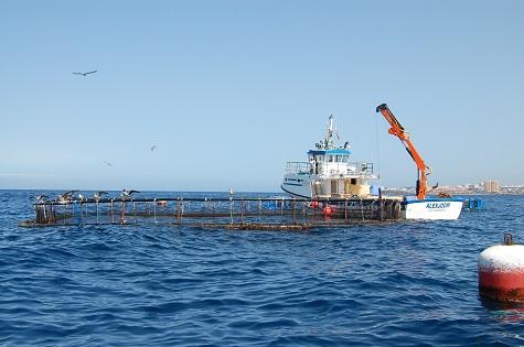 La Universitat d'Alacant lidera un projecte per a millorar el cultiu de peixos en mar oberta davant d'episodis climàtics extrems