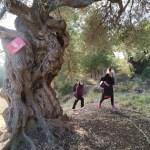 El Ayuntamiento de l'Alfàs prepara la implementación de un Plan de Senderos Saludables
