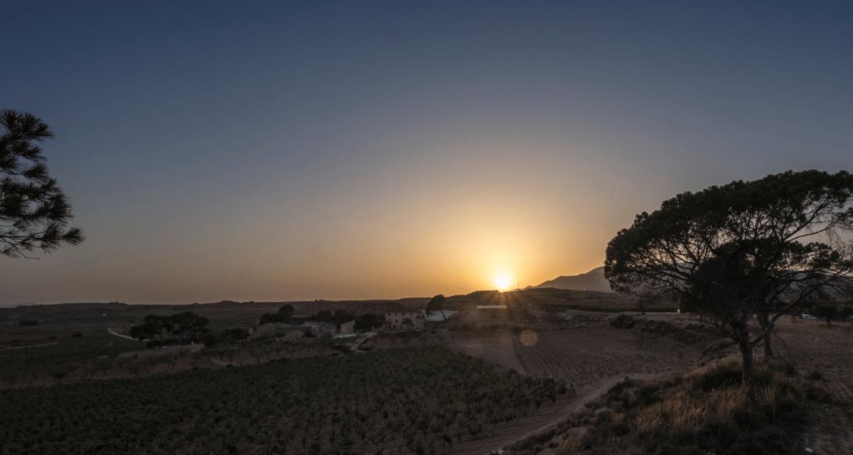 La vinya i la terra Alacantina