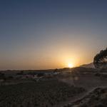 La viña y la tierra Alicantina