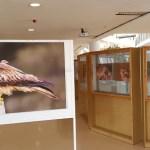 """El fotógrafo y naturalista villenense Miguel Ángel Berbegal inaugura la exposición """"Conocer para proteger"""" en la Universidad de Alicante"""