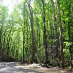 Loboc bilar man made forest bohol philippines tourist attraction 0007