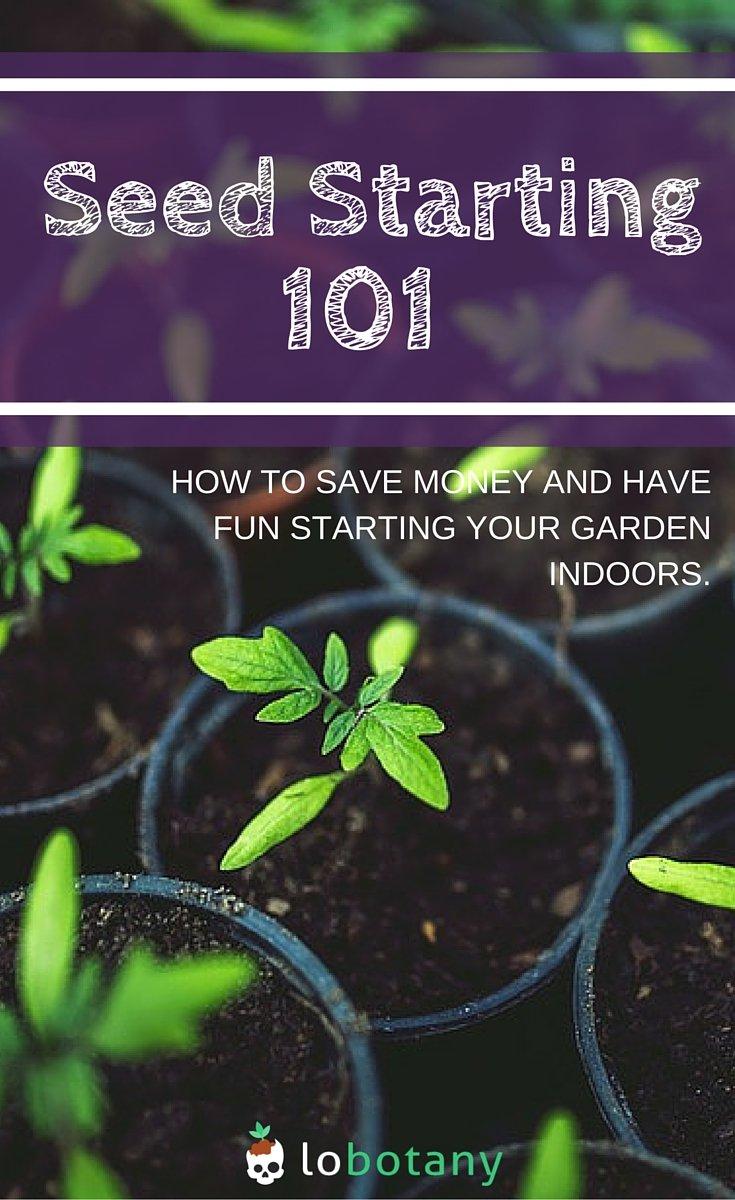 Seed Starting Indoors For Beginner Gardening