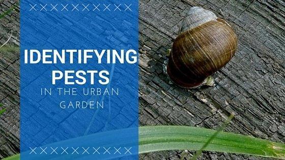 Identifying Pests In The Urban Garden