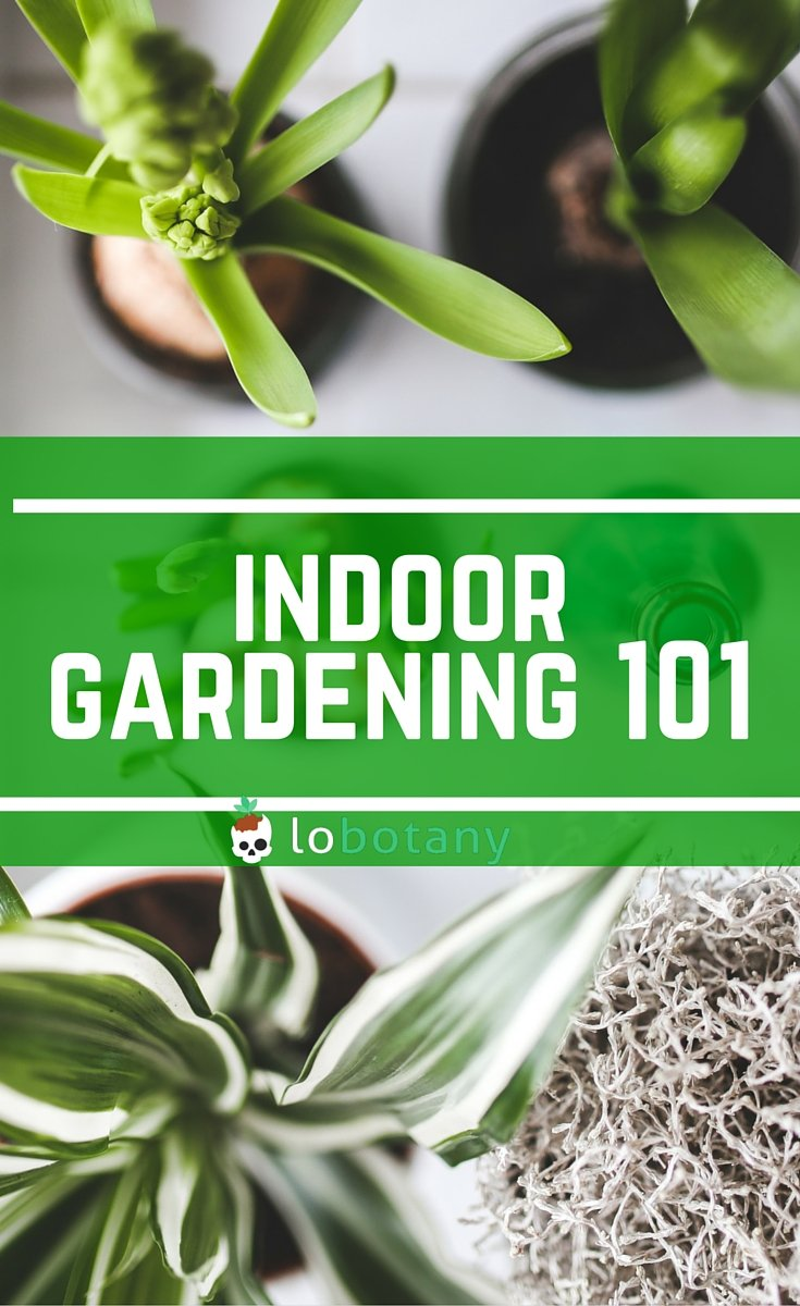 How To Start An Indoor Garden For Beginners