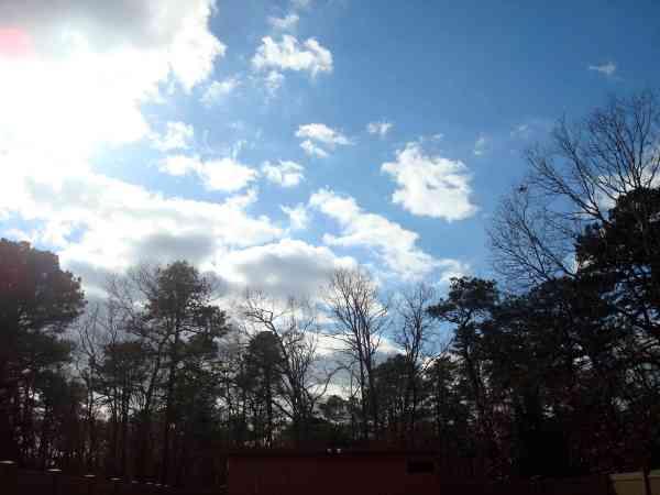 dream house backyard tress sky
