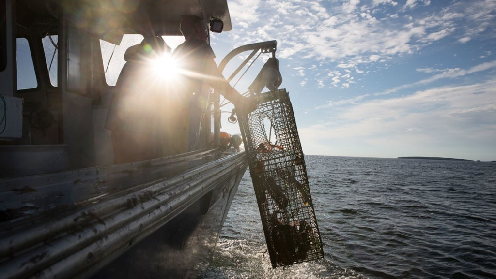 Dawn Greets Lobster Boat Hauling Traps