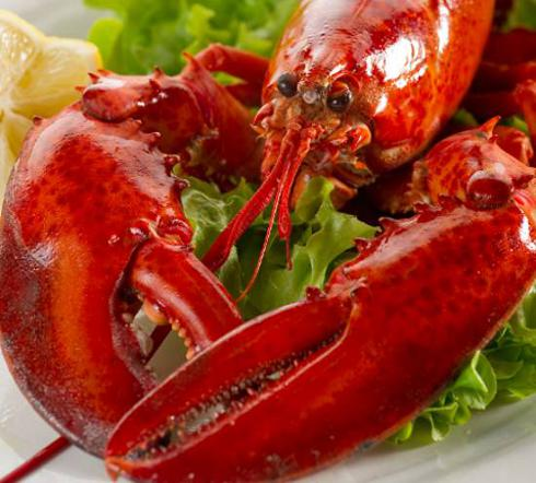 jumbo maine lobster cooked on a plate