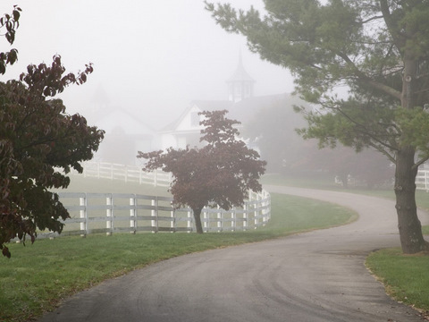 Manchester Horse Farm on a Foggy Morning, Lexington, Kentucky