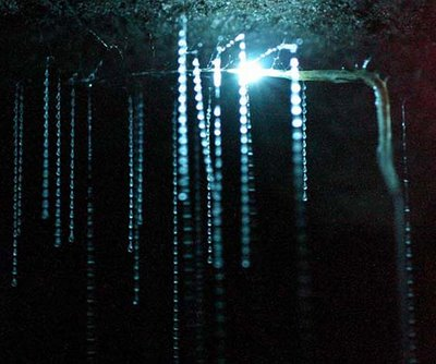 waitomo glowworm cave new zealand